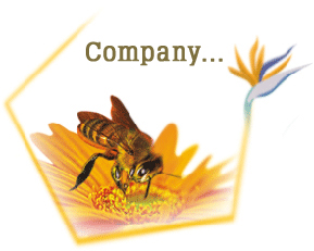 Little Bee Impex - Indian Honey Suppliers